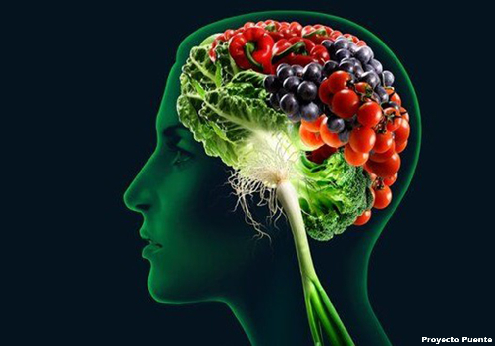 How Does Meals Influence Overall health?